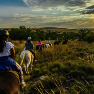Harties-horse-trail-safaris-434